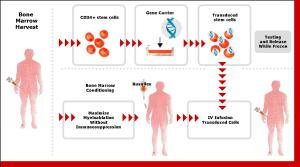 Figure 1: How Genetix' gene therapy works